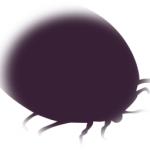ジメジメしたら湿気虫の対策を【発生場所や駆除方法を解説】
