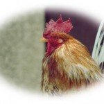 知られざる鶏レバーの成分とは【栄養価からカロリーまで解説!】