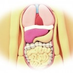 腸内フローラの改善!【3つの食事療法を試してみてスッキリ!】