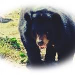 熊胆の5つの効果がスゴい【この副作用に注意しよう!】